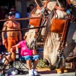 Palm-Springs-2015-1587